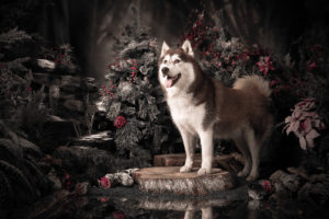 animal photography pet portraits animal portraits